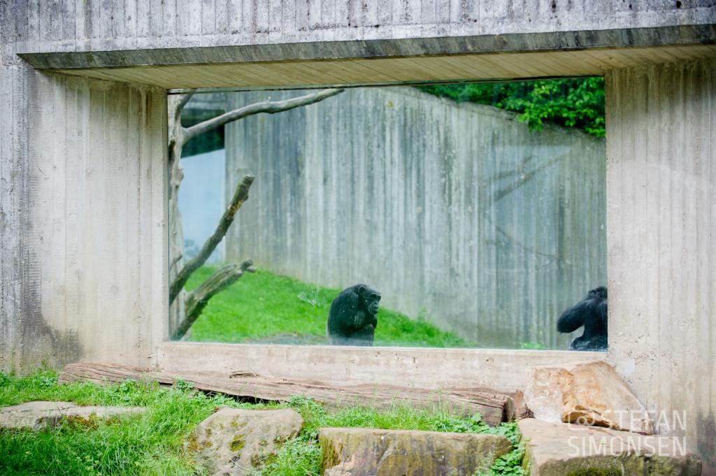 Altes Schimpansen-Gehege im Zoo Hannover