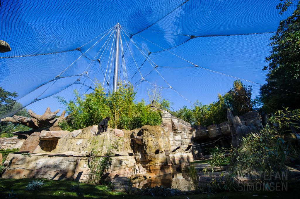 Übersichtsfoto des neuen Schimpansen-Aussengeheges Kibongo im Erlebnis-Zoo Hannover
