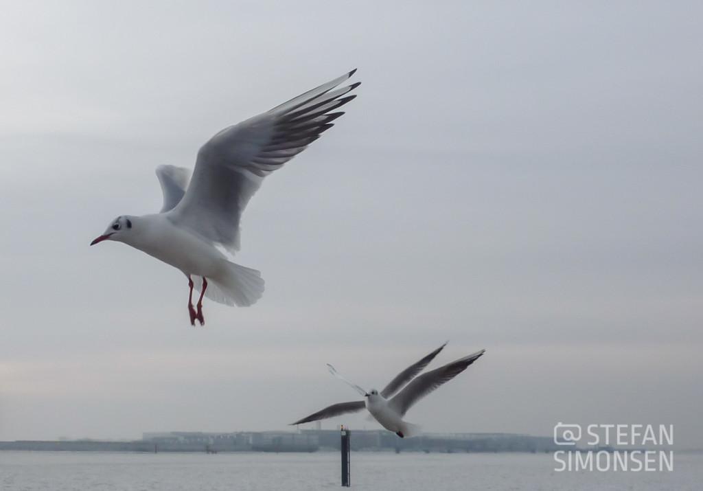 Eine Möwe fliegt über die winterliche Elbe bei Hamburg-Teifelsbrück