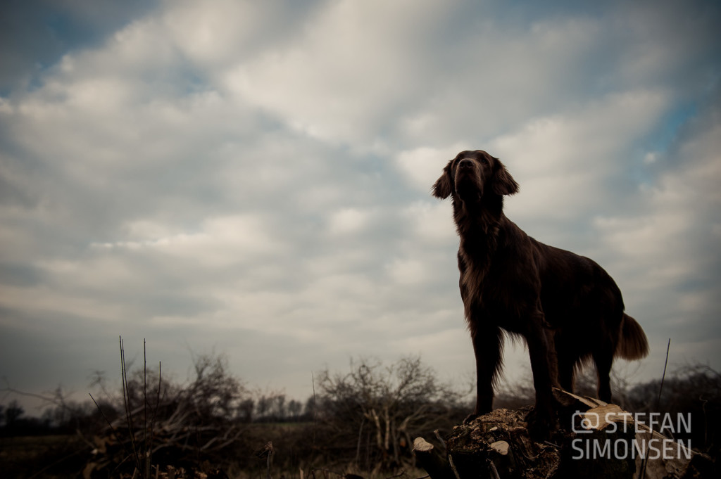 Hunde-Portrait ohne Blitz...