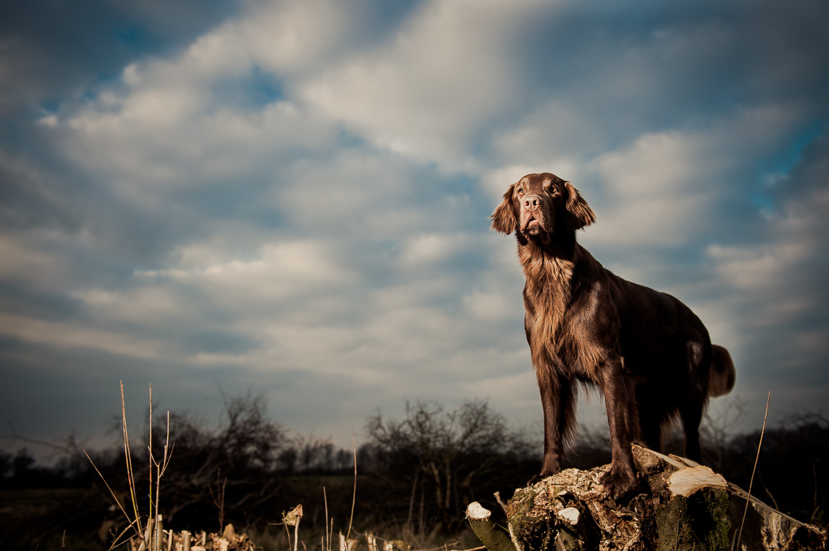 Hundeportrait mit Blitzlicht
