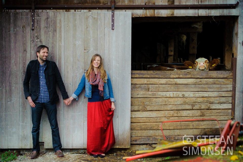 Ein Paar steht bei einem Paarfoto-Shooting neben einem Stall aus dem eine Kuh guckt
